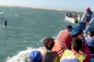 2 500 niños de excursión al avistamiento de la ballena gris en Comondú 2