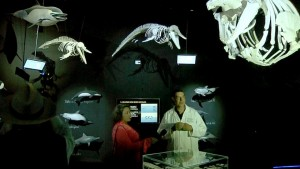 3 Museo de la Ballena expone 38 esqueletos de cetáceos en La Paz